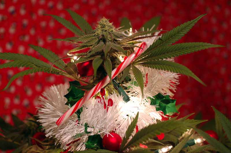 cannabis decorated like a christmas tree